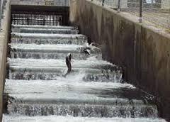 march 2013 sandrp dam fish elevator fish ladders do they work? dams