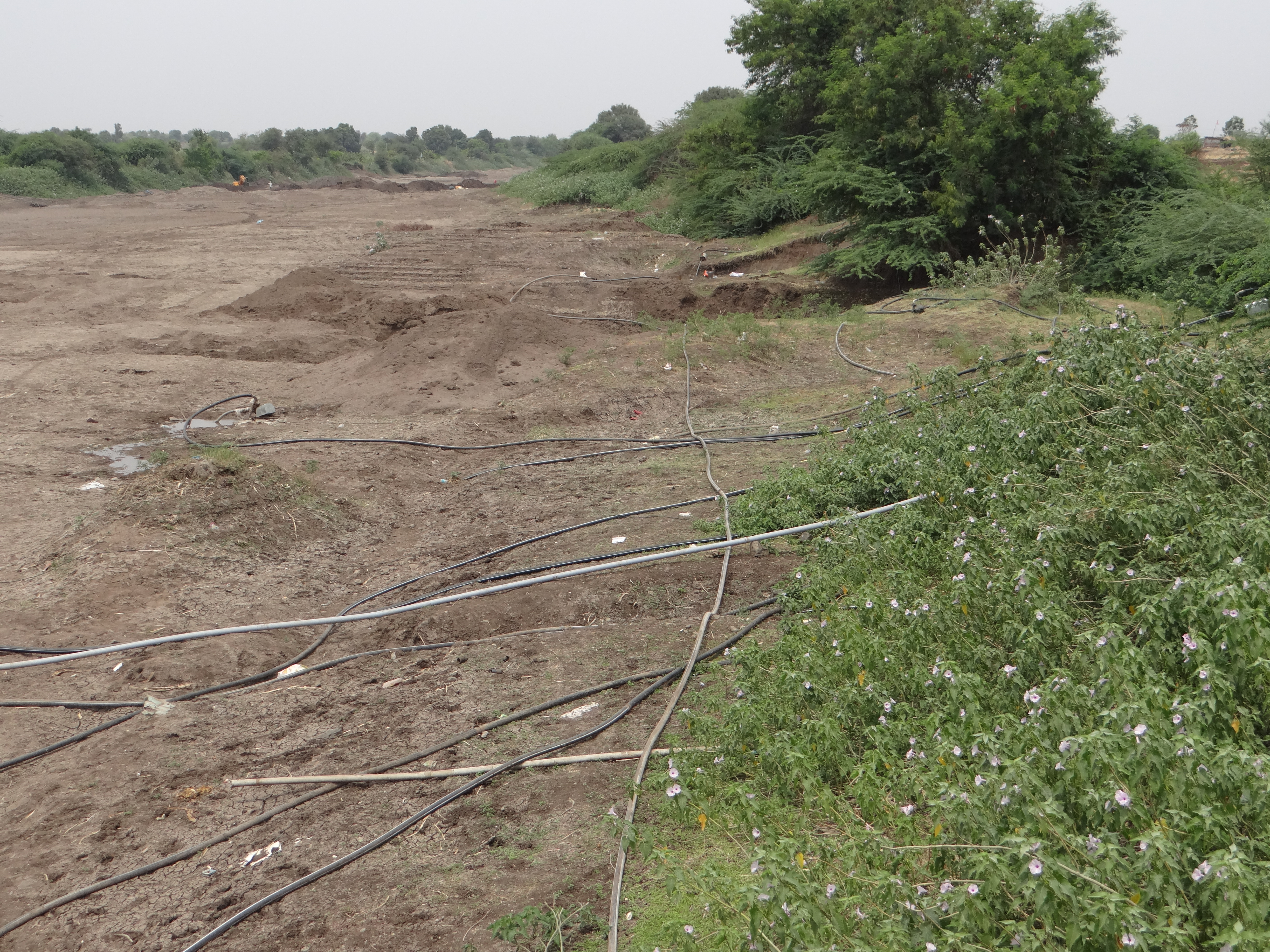 Dry Seena River in Madha in March 2013. Madha has a dense concentration of Sugar Factories. Photo: SANDRP