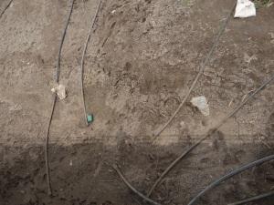Dry Seena in Madha Block Solapur