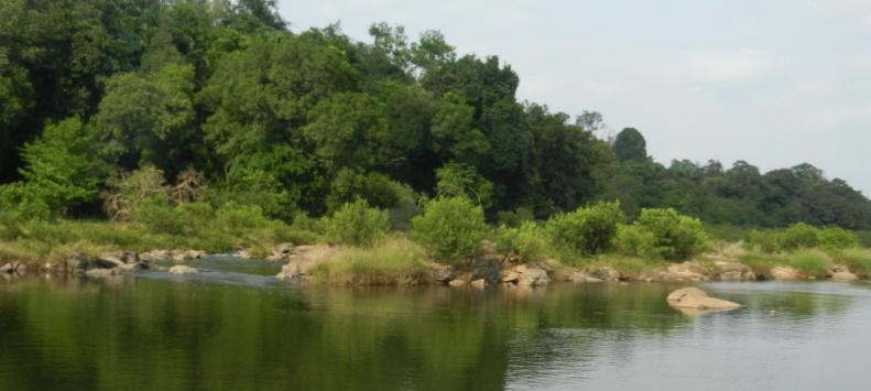 Pristine Forests set for submergence under the 24 MW Kukke Mini hydel Plant in Dakshin Kannada, Karnataka. Photo: SANDRP