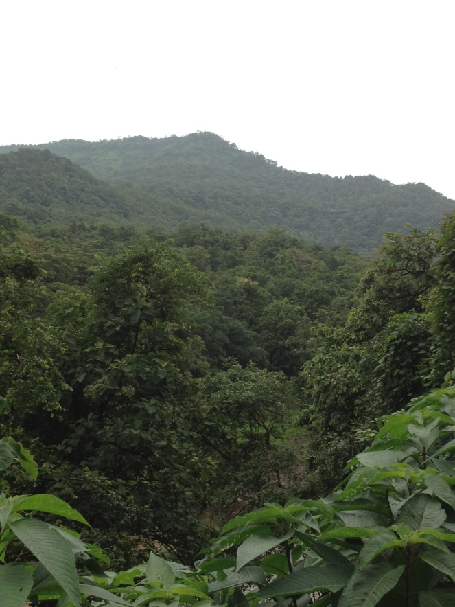 Forests in Tansa Wildlife Sanctuary. 750 hectares of these primer forests will be submerged for the Gargai Dam. Photo: SANDRP