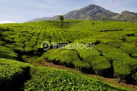 Plantations in Western Ghats Credit: Thinkstock