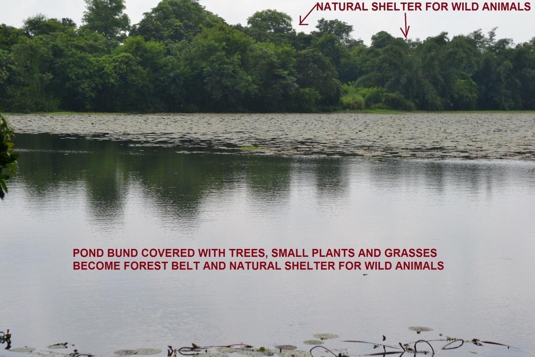 12. Pond Bund as a Forest Belt