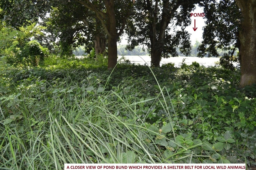 14. pond bund as a shelter for wild animals