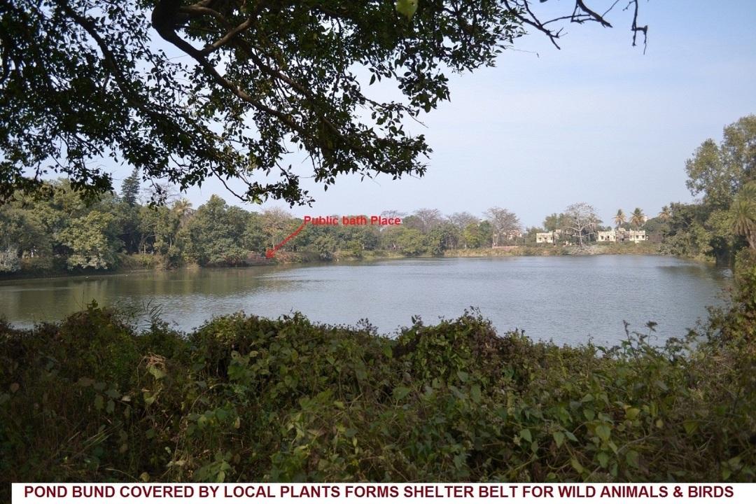 15. Pond bund for shelter for bird and wild animals