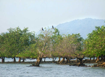 Estuary of River Aghanashini Courtesy; The Hindu