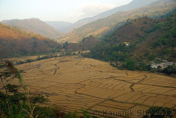 Paddy feilds in Siang Basin. Agriculture finds no place in the CIA Photo: Kaushik Shil