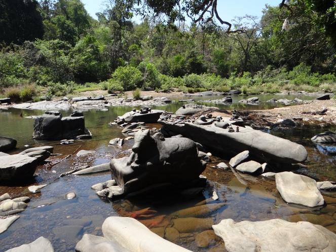 Shalmala Riverbed with Shivlingas and Carvings at Sahasralinga