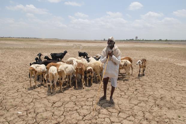 Drought 2013. Photo: Mint