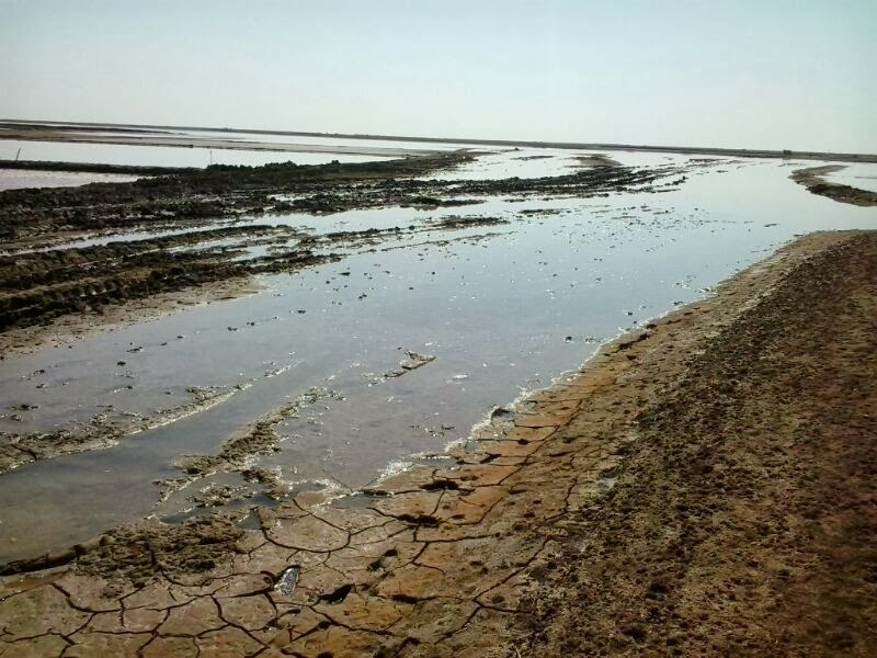 Narmada Waters flowing unused in the Rann of Kutch, harming the eocsystem and saltpan workers livelihoods Photo: Counterview.net