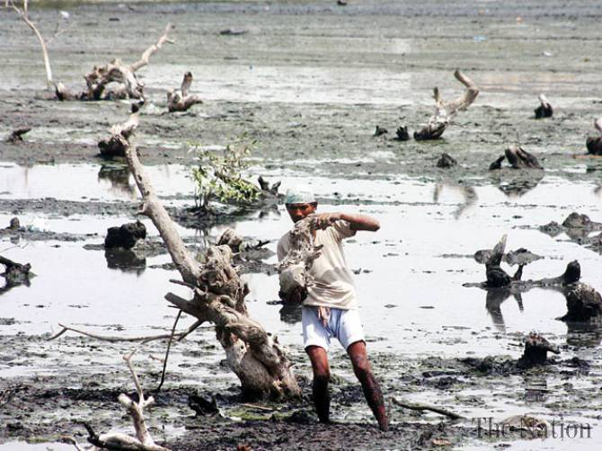 Dying mangroves in Indus Delta Photo: The Nation
