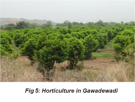 Gawadewadi Figure 5