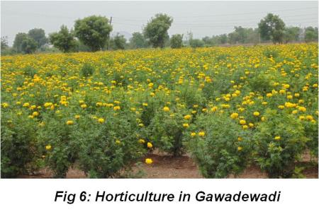 Gawadewadi Figure 6