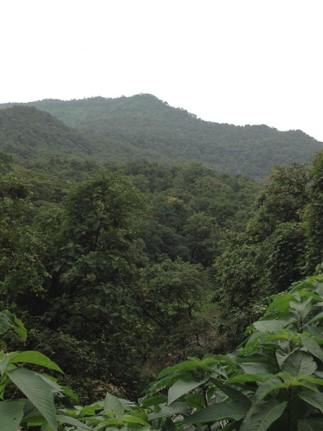 Forest_Gargai_Near-Ogade