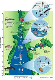 From: The River continuum Concept. Species in India will be different, but this represents how biological entitites in a river are linked to each other through a number of processes including nutrient spiralling Oxbowriver.com