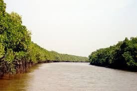 The Bhitarkanika Mangrove System is a rich repository of biodiversity, while providing shelter from coastal erosion Photo fro Vagabound images