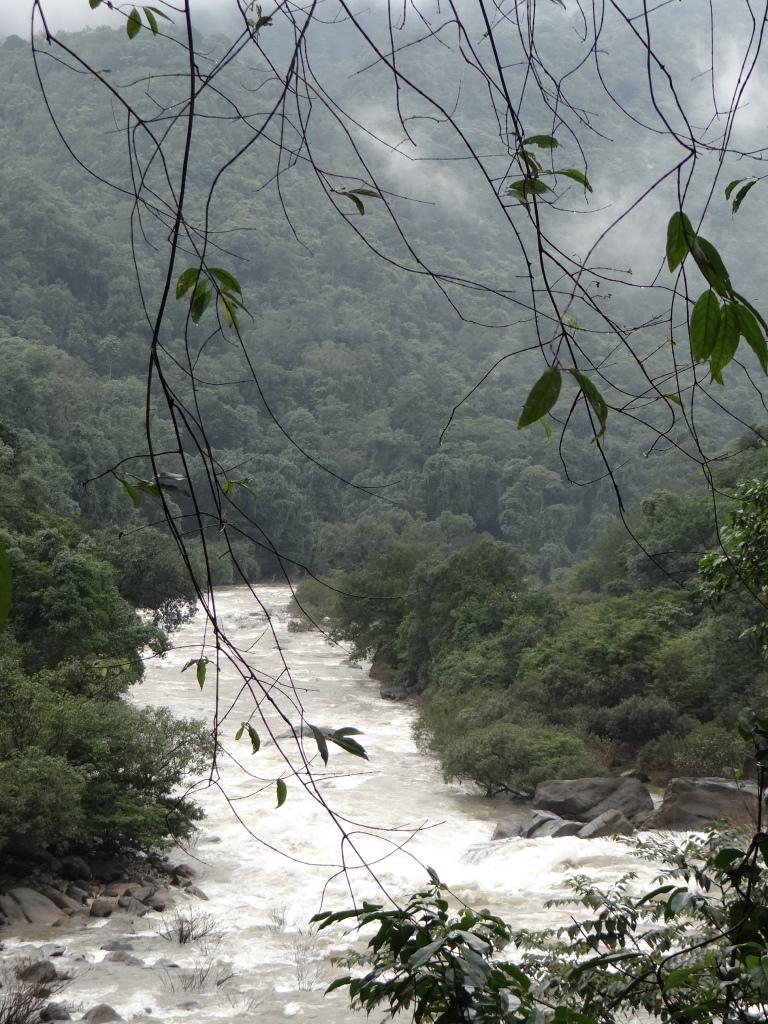 Netravathi in the Upper reaches Photo: Parineeta Dandekar