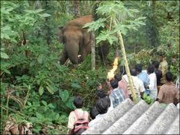 Cornered Wildlife in Sakaleshpur, leading to crisis Photo: News 24 7