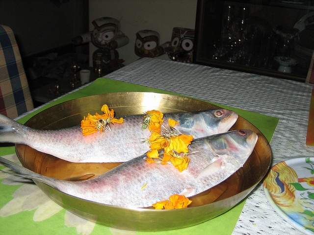 Hilsa as a sacred offereing Photo from Flickr, with thanks to the contributor