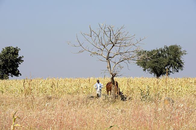 Drought in Marathwada, Maharashtra Photo: India Today