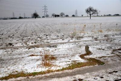 Destruction ofcrops due to untimely hailstorms in Marathwada Photo: Sakaaltimes