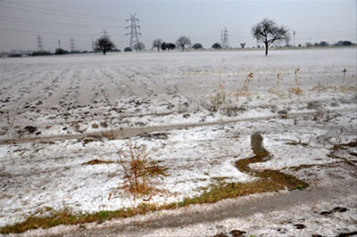 Destruction ofcrops due to untimely hailstorms in Marathwada Photo: Sakaaltimes
