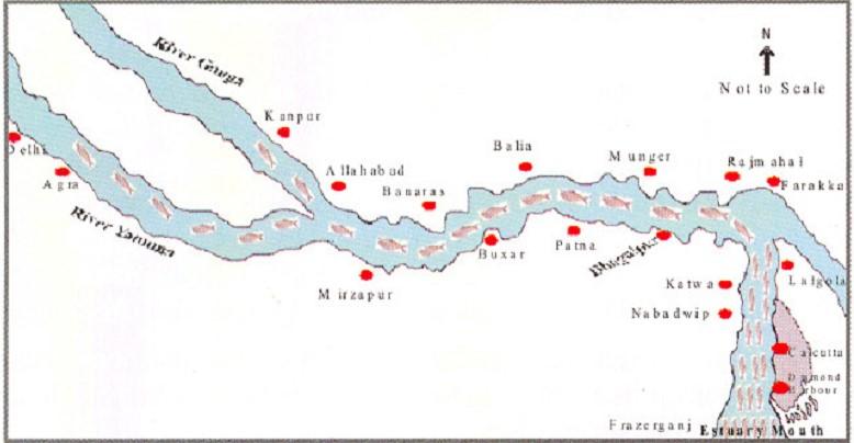 Migration route of Hilsa, Pre Farakka Barrage spanning about 1400 kms Source: CIFRI 2012