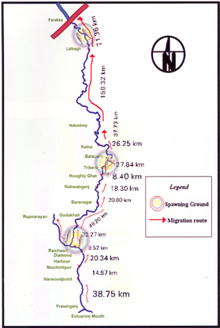 Highly restricted range of Hilsa post Farakka Source: CIFRI
