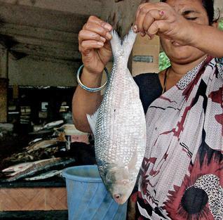 Pulasa/ Hilsa of teh Godavari Photo: The Hindu