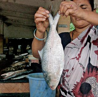 Pulasa/ Hilsa of teh Godavari Photo: The Hindu