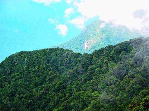 Dibang Valley Forests Photo: The Telegraph