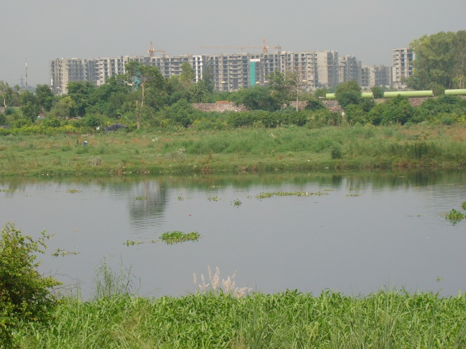 Listless and dying river in Delhi Photo: Yamuna Jiye Abhiyan