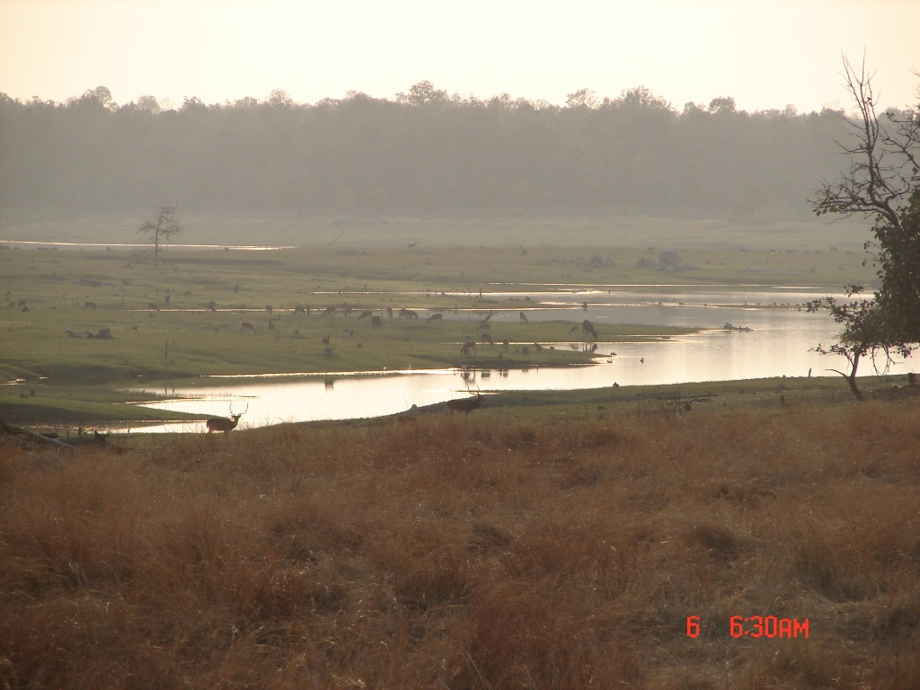 Pench National Park in Godavari- Wainganga Basin Photo: Parineeta Dandekar, SANDRP