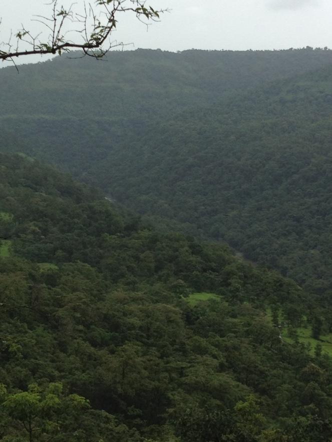 Forests to be submerged by Gargai Dam Photo: Parineeta Dandekar
