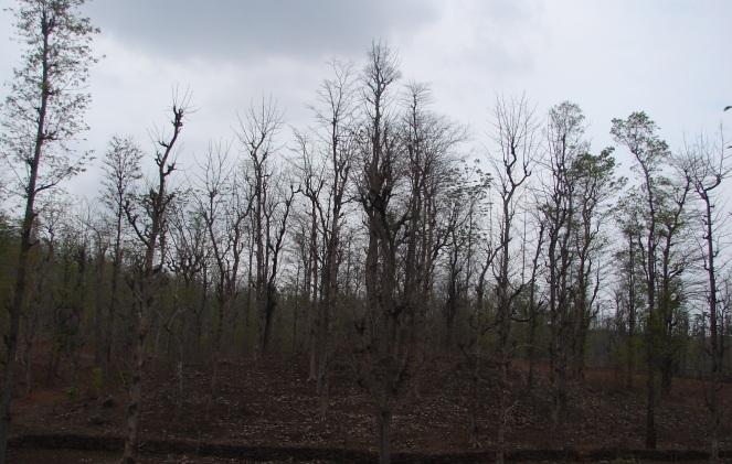 Dry deciduous forests of the Par-Nar Basin Photo: Parineeta Dandekar