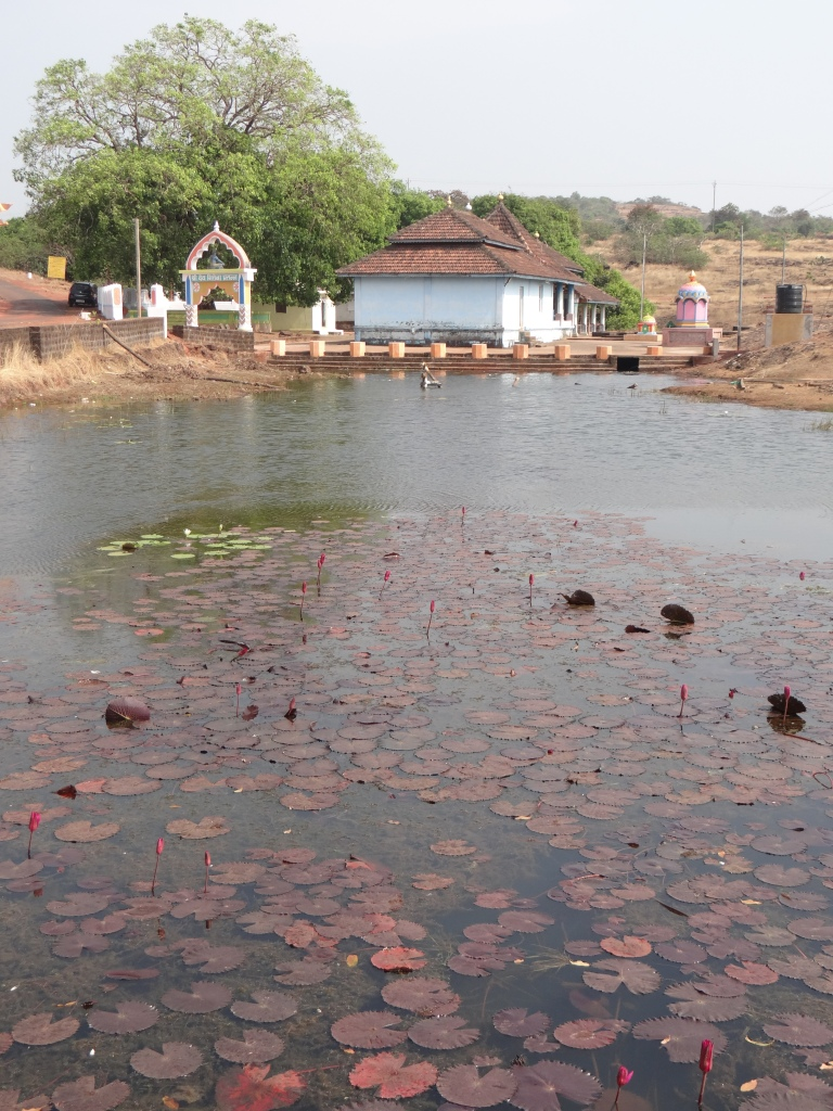 A typical Temple Tank in Western Ghats has a huge cultural and ecological significance Photo: Parineeta Dandekar