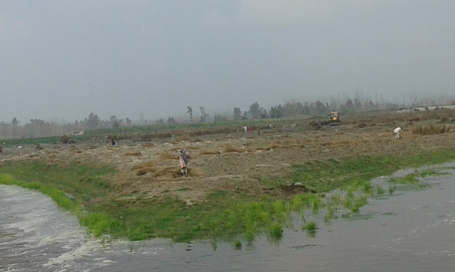 Flood water entering riverbed farms at Ramra village in Shamli district Photo by Mustkim Mallah