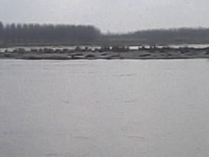 Flooded Yamuna on March 3, 2015 (Photo by Anil Sharma, Kanalsi Village, Yamuna Nagar, Haryana)