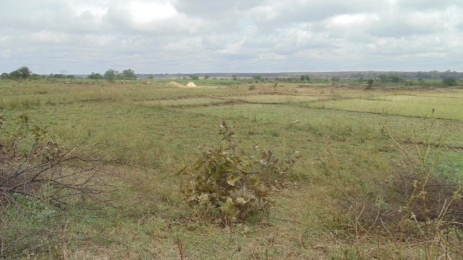 Proposed dam site at Shivni Village Chandrapur District (Photo: SANDRP)
