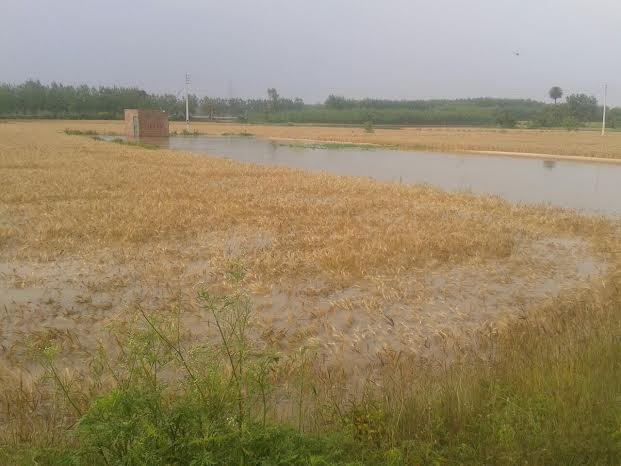 The breach submerged the vast cropland
