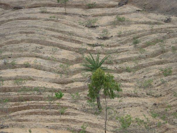 Some watershed measures undertaken in Parner, Ahmednagar District Photo: Zareen P Bharucha