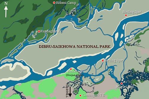 Dibru Saikhowa National Park  Photo: Kolkata Birds