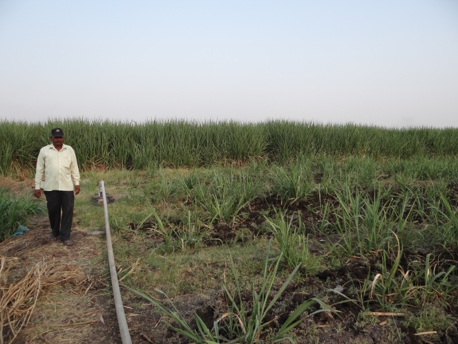 Borewells irrigating sugar in Solapur Photo: Parineeta Dandekar