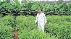 Multi crop farming in Sakaleshpura Photo: Deccan Herald