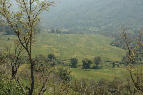 Scenic View of   Maletha's Farmland