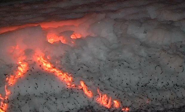 Foaming Bellandur Lake on fire Photo : Deccan Chronicle