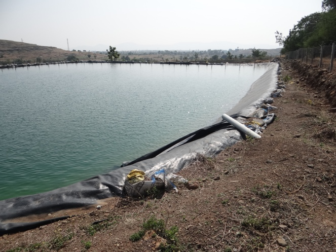 Famr pond in Nagar filled with groundwater from a neighboring field Photo: Author