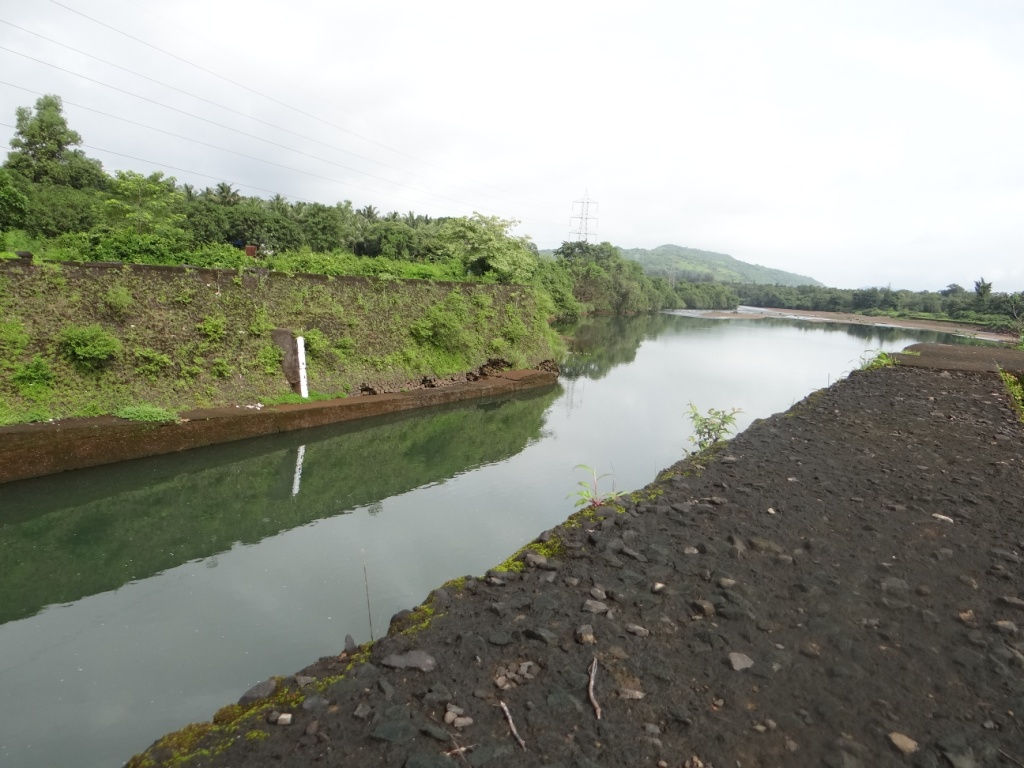 Koyana Tail Race Water flowing into Vashisthi River in Konkan on way to sea (Photo by Parineeta Dandekar Aug 2015)