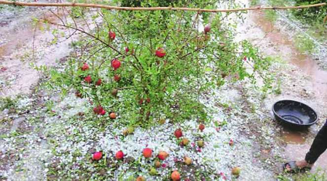 Crop loss following hailstorm in Marathwada Source: Indian Express