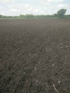 Shri. Ashok Pawar's field in Osmanabad, dry despite rains Photo: Ashok Pawar, Omarga